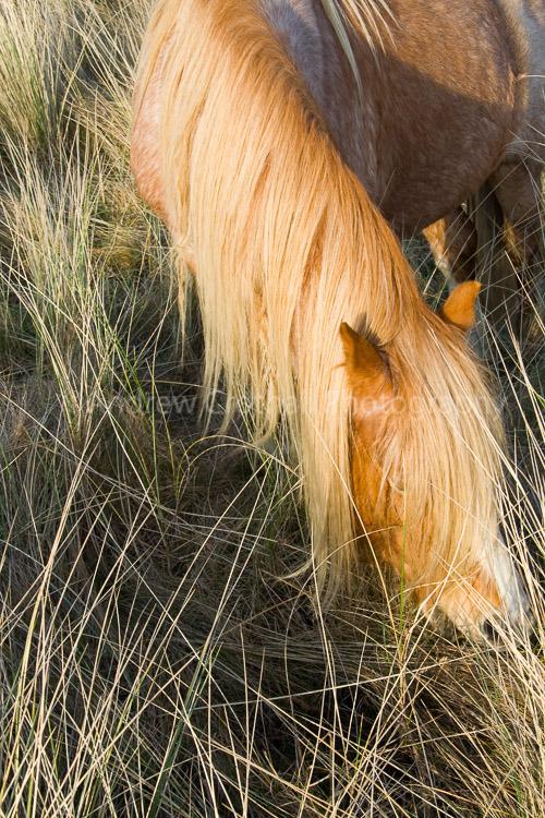 Llanddwyn pony