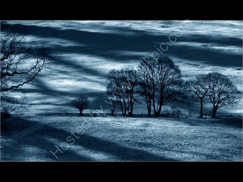 Wintry Landscape in the Snow