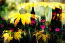 City of Flower Power