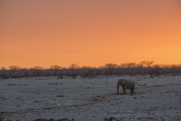 Elephant at sunset, Etosha, Namibia
