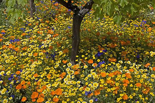 The Fetzer Vineyard show garden - Chelsea Flower Show, 2005