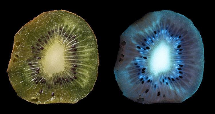Over-ripe Kiwi Fruit, fluorescing in UV.