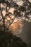 Sunrise, Primary rainforest, Danum Valley, Sabah, Borneo
