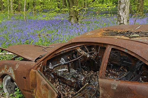 Burnt out car in Surrey Bluebell Wood
