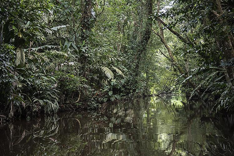 Waterway, Tortuguera National Park