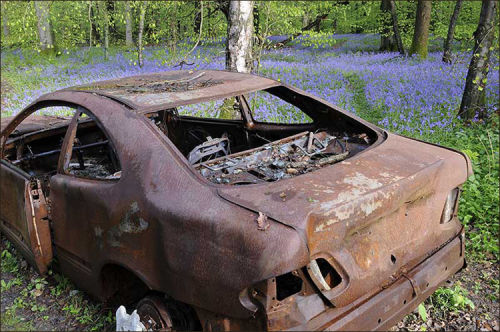 Burnt out car in Bluebell wood