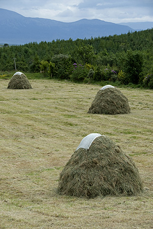 Traditional Haystacks, County Mayo, Ireland. 2008