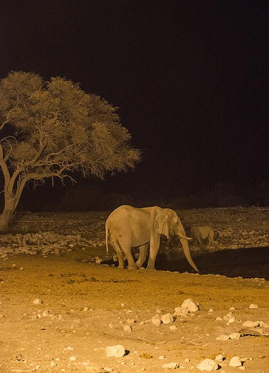 Elephant at waterhole at night, Etosha, Namibia