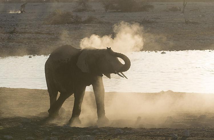 Elephant creating dust strom. Etosha, Namibia