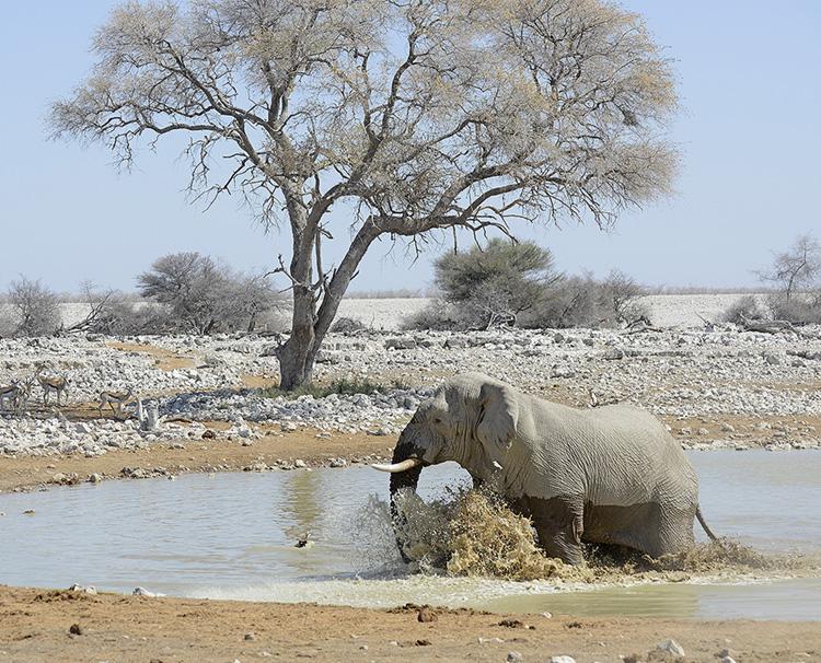 Elephant at waterhole, Etosha, Namibia