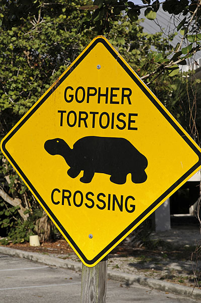 Gopher Tortoise warning sign, Everglades, Florida