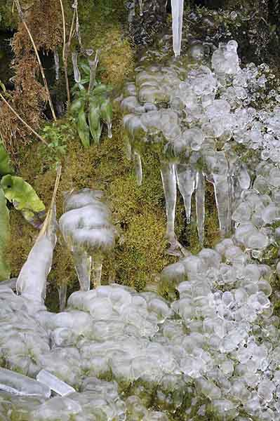 Ice formation on moss in winter