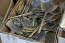 Dried lizards for sale in a herbal medicine market, Hong Kong