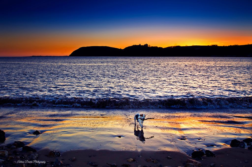 Betty the Jack Russell on Ferryside beach