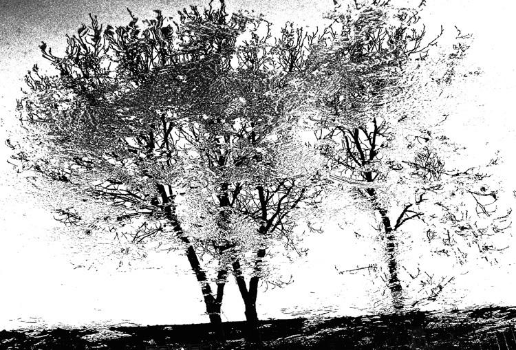 'Iced Trees'