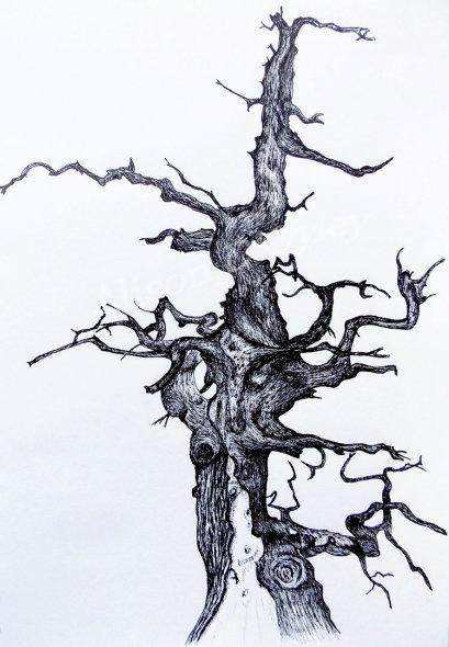"""'Old Oak"""""""