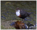 Dipper with food for young