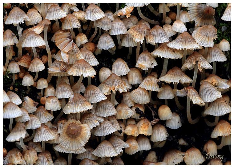 Fungi sp