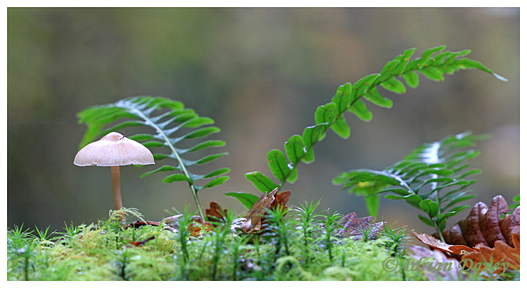 Fungi, moss and Fern growing on branch.