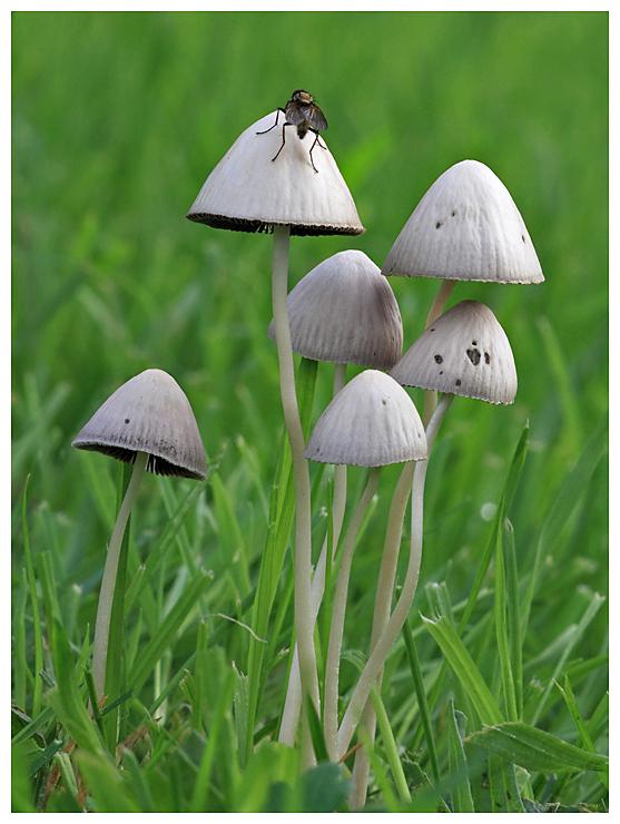 Fungi and Fly