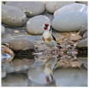 Goldfinch at pond