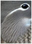 Mandarin female close up.