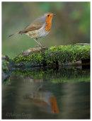 Robin Reflection