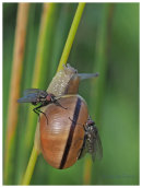 Snail and Flies