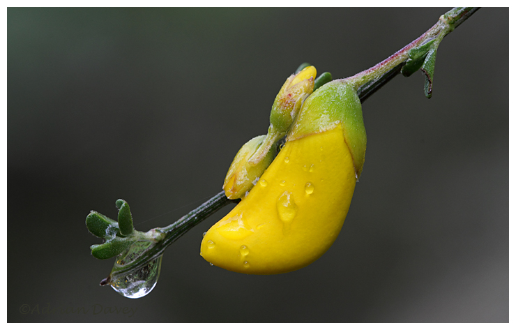Broom after the rain