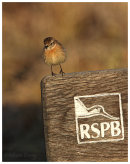 Stonechat on RSPB sign
