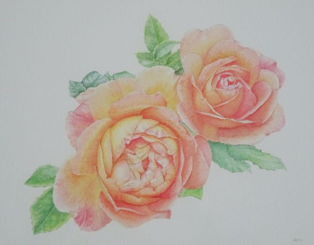 Cliveden Roses: inktense: £ 110: 44 x 34 cm