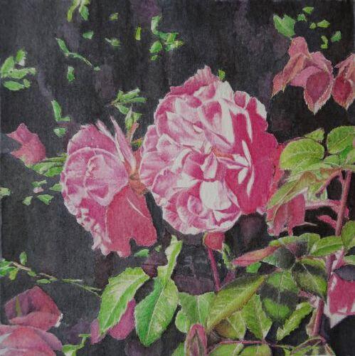 Pink Roses: inktense: £ 80: 33 x 33 cm