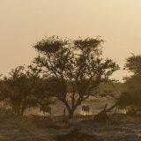 413-Zebra's komen naar drinkplaats