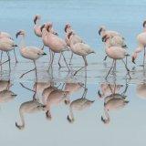 428-Flamingo's bij Walvisbay