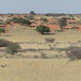 431-Kalahari