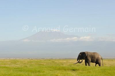 Elephant Bull and Kilimanjaro