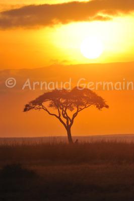 Amboseli Sunrise