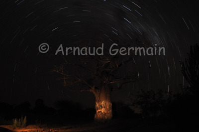 Baobab & Star Light Trail.