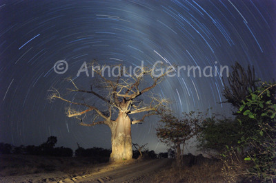 Liwonde Baobab and Starlight Trail