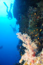 Soft Coral and Divers on Elphinstone Drop Off