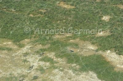 Animal Tracks, Eastern Shore of Lake Nakuru.