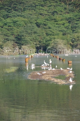 Lake Nakuru Under Water