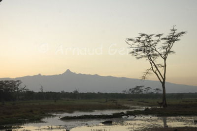 Swamp and Mount Kenya