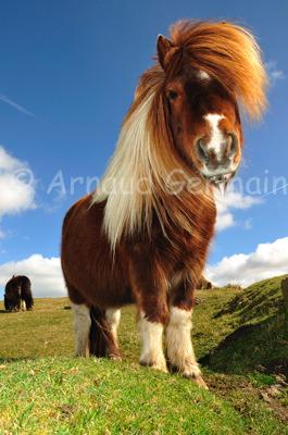 Poney on Dartmoor