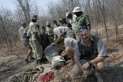 At a rhino capture