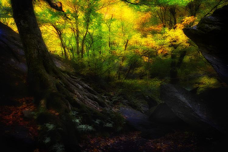Autumn Light and Colour