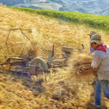 Old Fashioned Harvesting