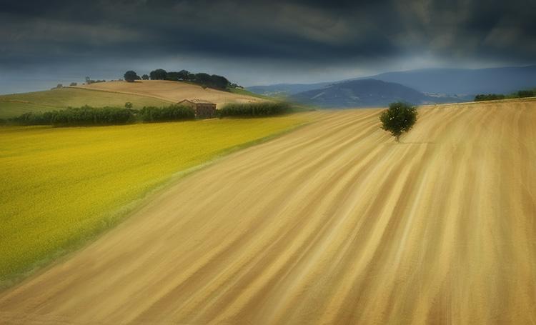 Harvest Lines