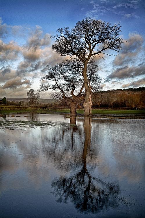 Tree in Flooded Field