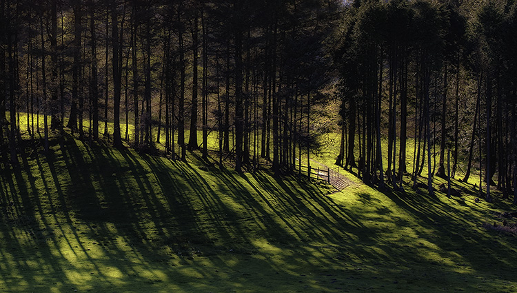 Row of Trees and Shadows